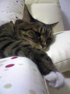 愛猫ミュー
